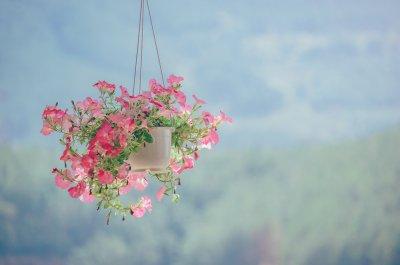 The Top 10 Hanging Basket Plants