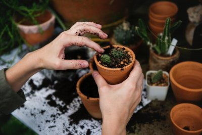 How To Get Rid Of Soil Mites For A Healthier Garden