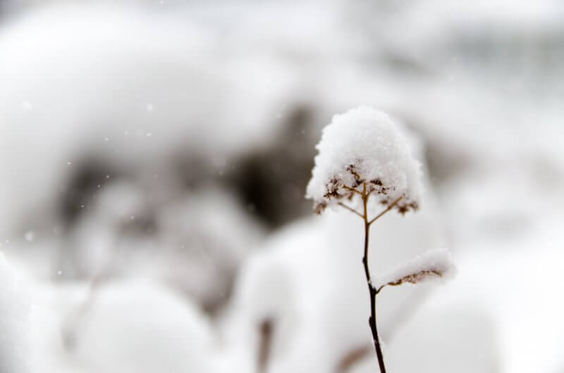 Winter Flowers Three Flowers that bloom in Winter