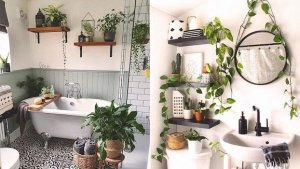 Potted Shelf Plants
