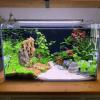 Best Fish Tank Decor Ideas