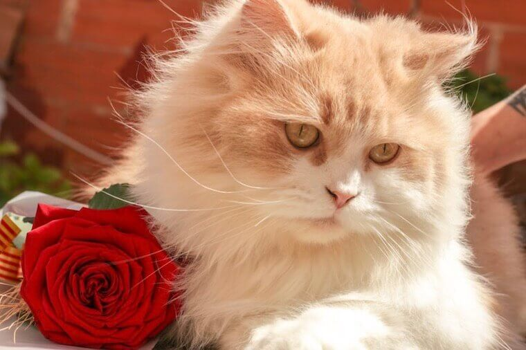 Cat and rose