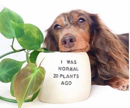 Funny flower pot