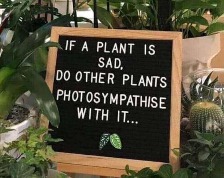 'If a plant is sad, do other plants photosympathise with it' sign with plants surrounding it
