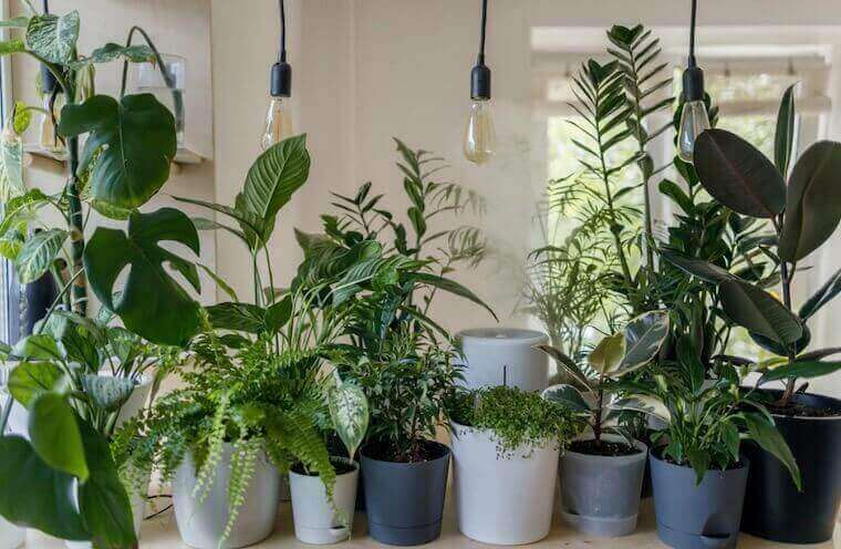 different house plants lined up