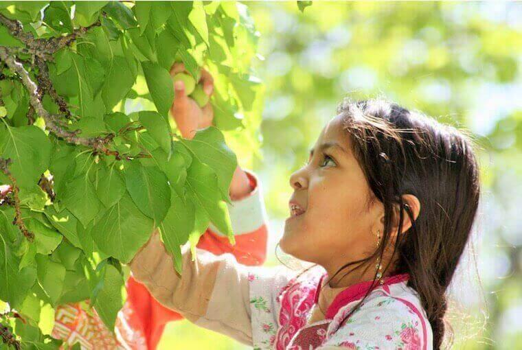 girl picking fruits