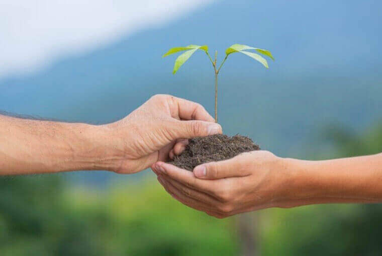 hand passing a sapling to another hand with soil in the receiving hand