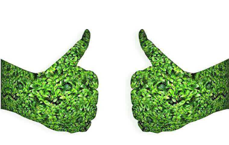 two hands filled with greenery giving a thumbs up