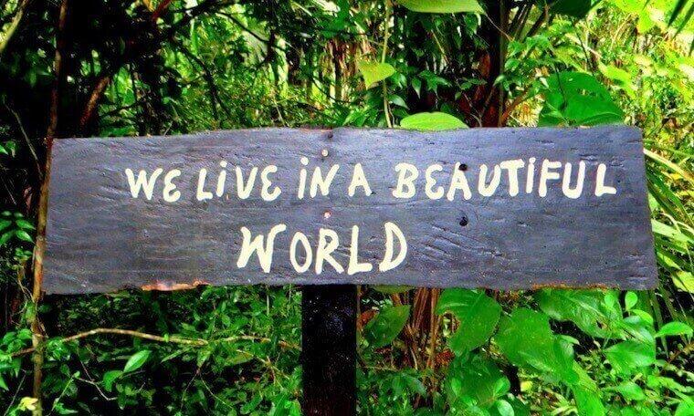 we love in a beautiful world' written in wood