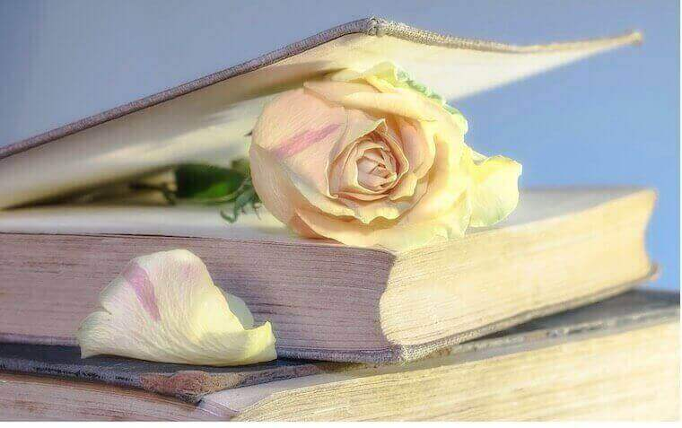 white rose placed on top of the book cover