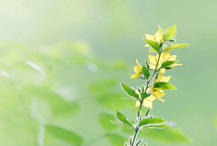 yellow flowers in morning